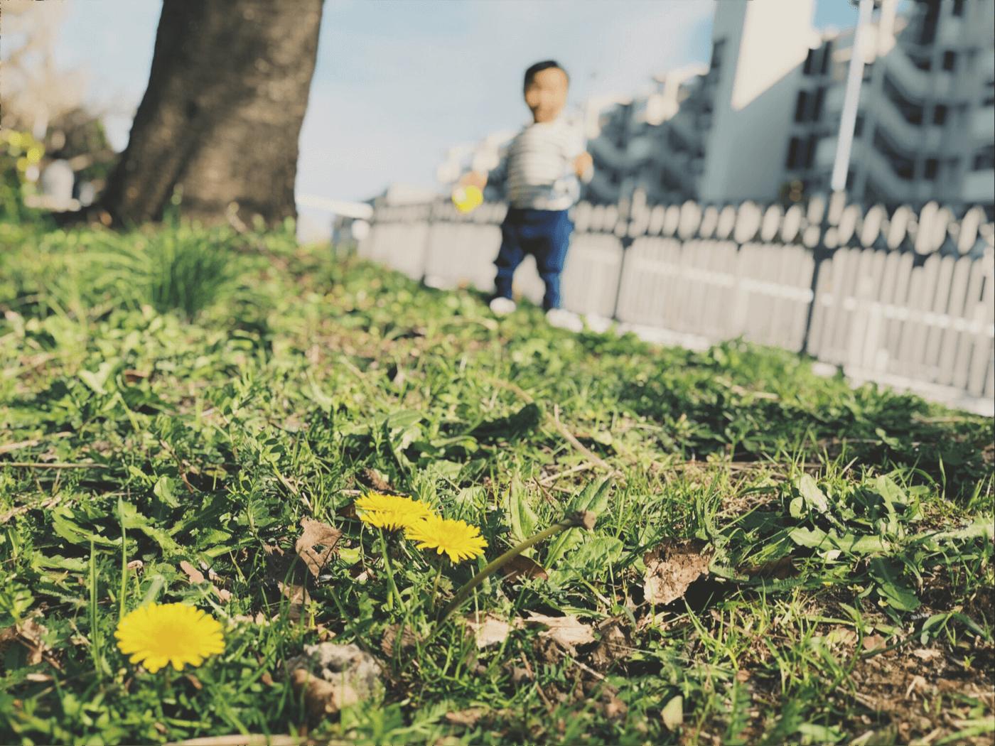 春らしくなってきた日の#shotoniphone